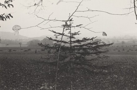 Evergreen Tree (Northern France, 1972)