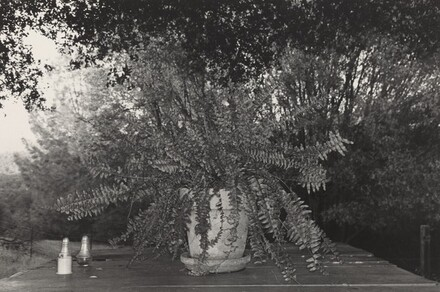 Potted Fern (Mariposa, California, 1972)