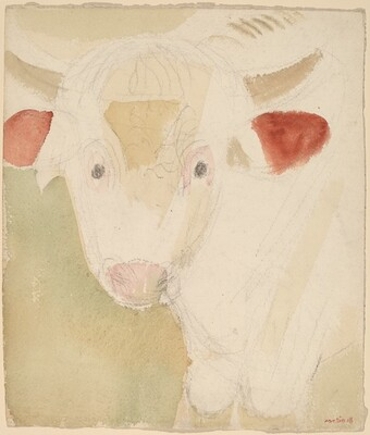 A Little Yearling, Ayrshire Bull, Rowe, Massachusetts