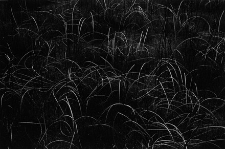 Grasses, Wisconsin