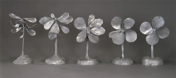 Metamorphosis of a Plant Into a Fan