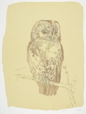 Tawny Owl (State I)