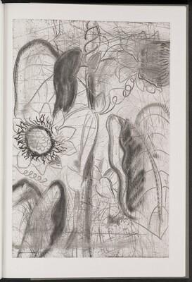 Quadrangular Passionflower