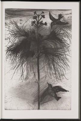 Powder-Puff Tree