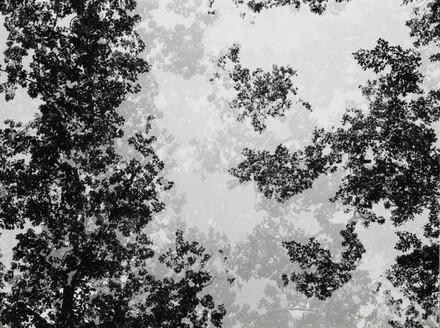 Multiple Exposure Trees, Detroit