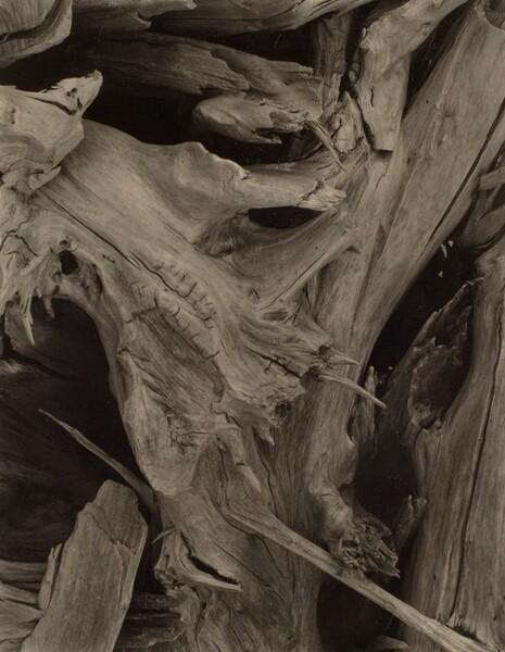 Driftwood [recto]