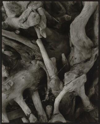 Driftwood, Dark Roots, Georgetown, Maine