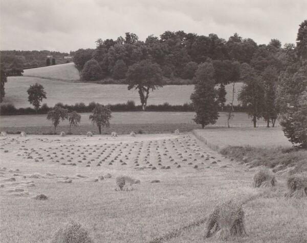 Wheatfield, France