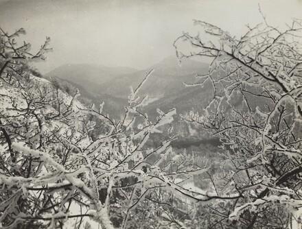 Winter in the Siebengebirge
