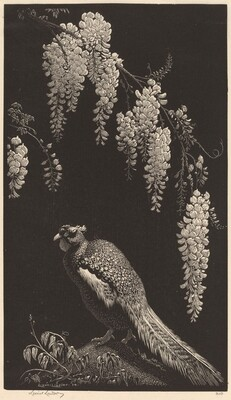 Pheasant and Wisteria