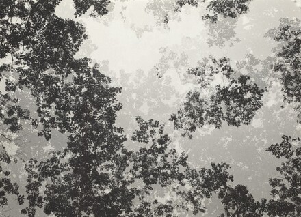 Multiple Exposure Trees