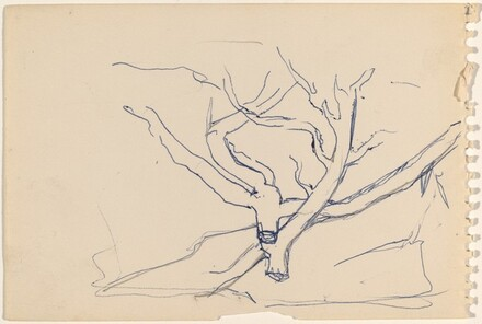 Study of a Dead Tree