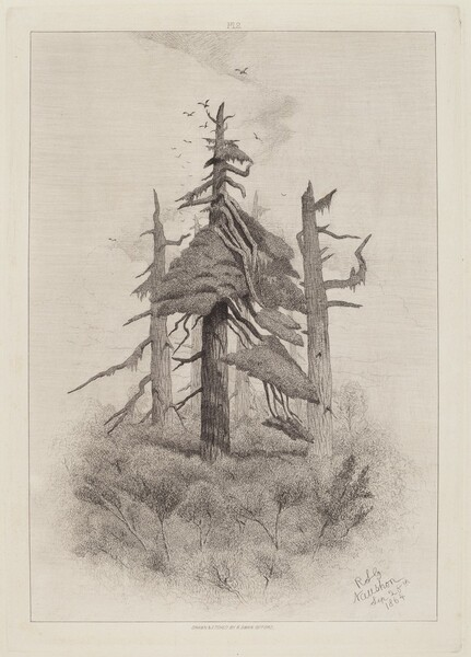 Old Trees at Naushon Island [plate 2]