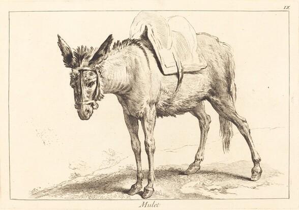 Mulet (Mule or Saddled Donkey)