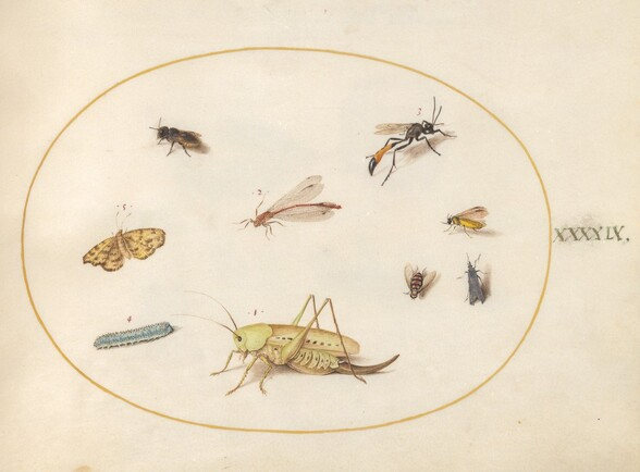 Plate 49: A Grasshopper, a Caterpillar, a Butterfly, a Moth, and Other Insects