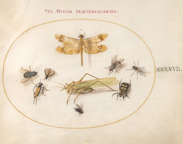 Plate 47: A Dragonfly, a Grasshopper, Houseflies, a Carrion Beetle, a Flower Longhorn Beetle, and Other Insects