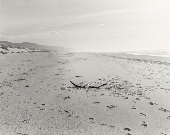 The Sea Beach, Albatross