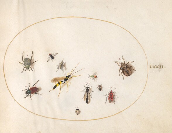 Plate 72: Shield Bug, Cinnamon Bug, Wasp, and Other Insects