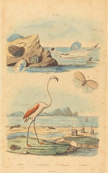 Flamingos and Shells