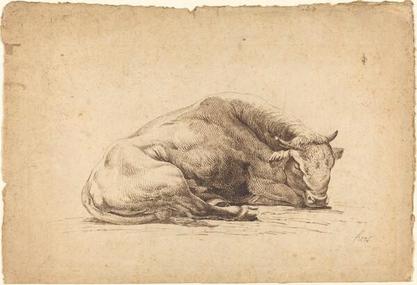 A Bull Sleeping
