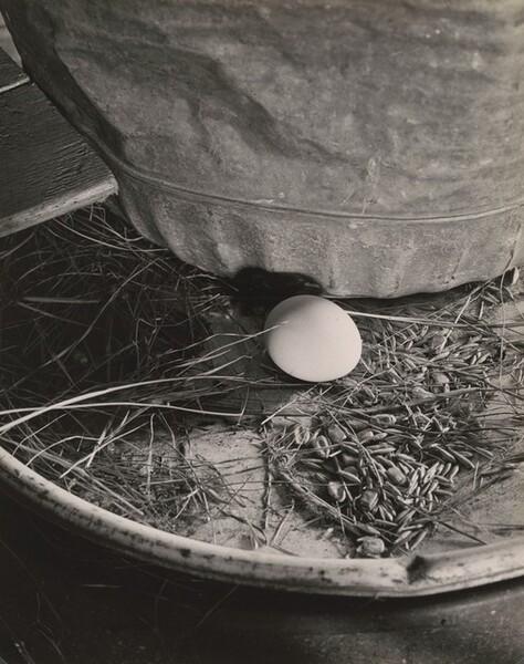 Egg on Oil Drum