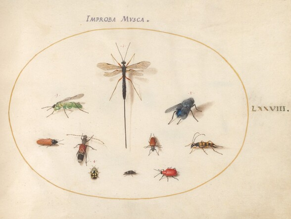 Plate 78: Ten Insects, Including a Blue Fly