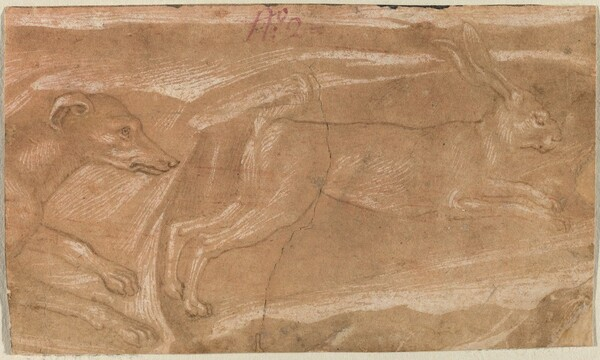 A Hound Chasing a Hare