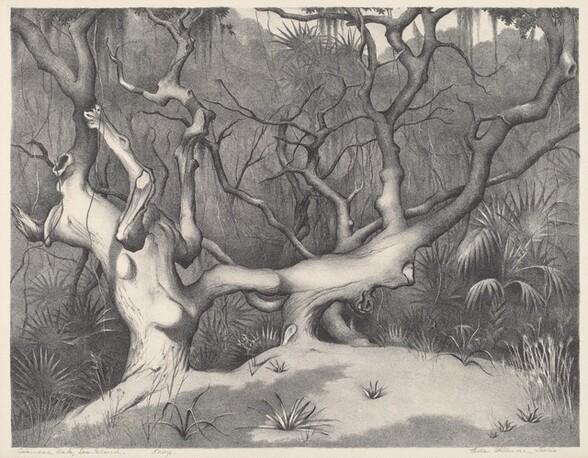 Siamese Oak, Sea Island