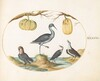 Plate 44: Godwit(?) and Sandpipers with Two Gourds
