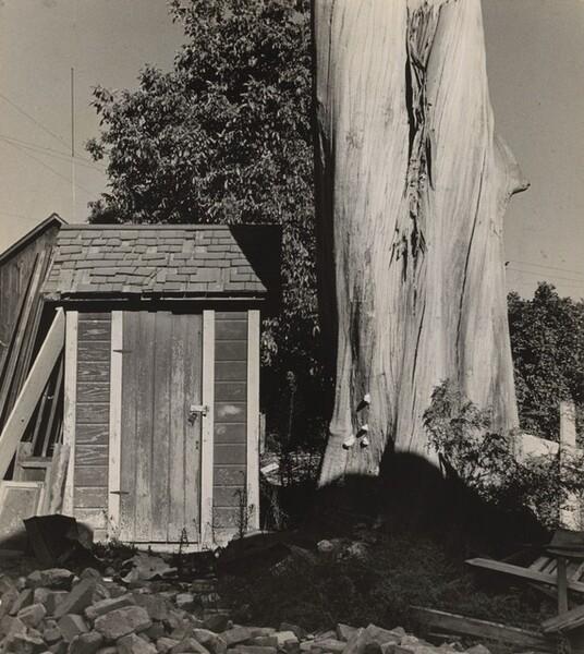 Outhouse and Eucalyptus Tree, California