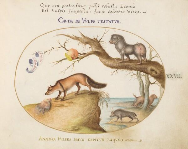 Plate 27: A Cross Fox, a Hyena/Baboon, a Sea Wolf, and a Gulon (Wolverine?)