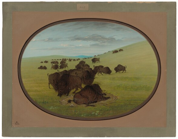 A Buffalo Wallow