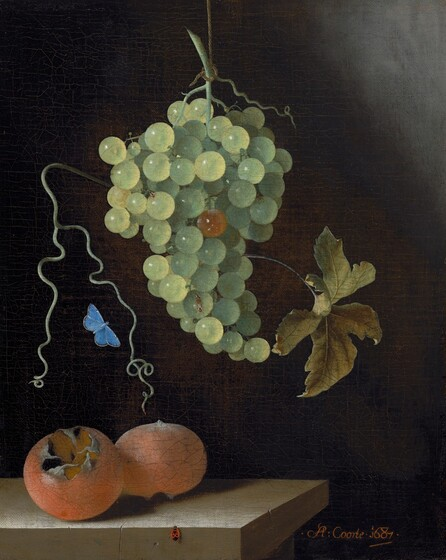 <p>Adriaen Coorte, Still Life with a Hanging Bunch of Grapes, Two Medlars, and a Butterfly, 1687