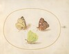 Plate 14: Common Brimstone, Red Admiral, and Clouded Yellow Butterflies