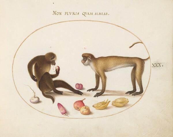 Plate 30: Two Monkeys