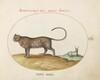 Plate 12: A Cheetah(?) and a Wild Sheep