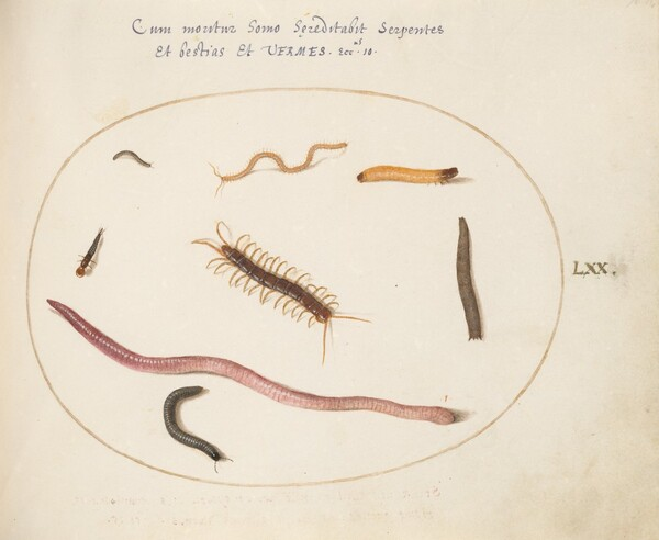 Plate 70: Worm, Centipede, Millipede, and Other Long Creatures