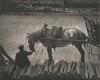 A Snapshot, Paris [horse]