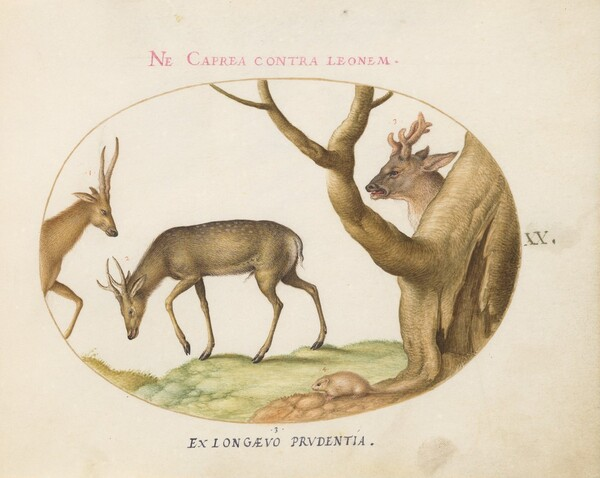Plate 20: Three Types of Stags with a Dormouse(?)
