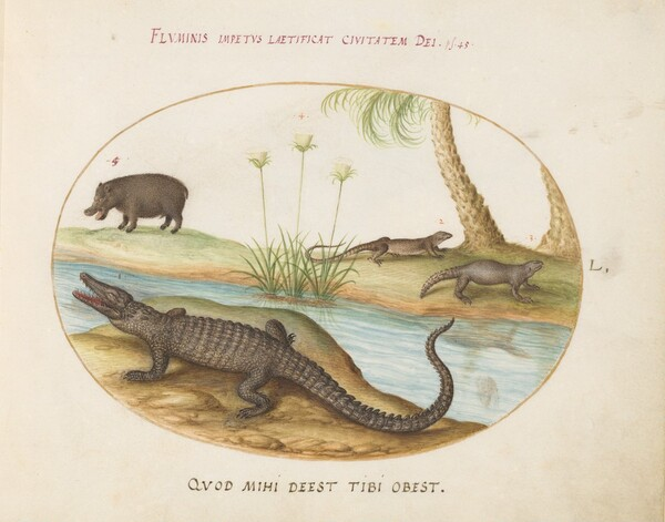 Plate 50: A Crocodile(?), a Hippopotomus(?), and Two Lizards with a Papyrus Plant
