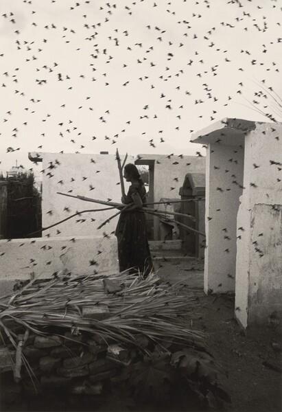 Mujer y Pájaros (Woman and Birds)