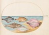 Plate 35: The Undersides of Turbot(?) and Other Flat Fish