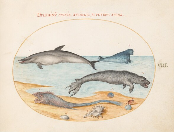 Plate 8: A Dolphin, Two Seals, a Brethmechin, and Shells