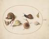 Plate 63: Seven Snails