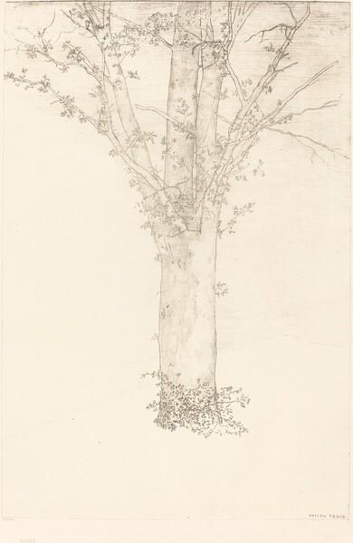 Arbre (Tree)