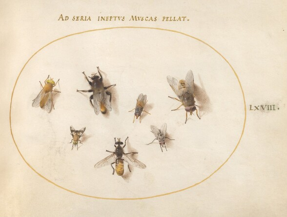 Plate 68: Seven Bees and Flies