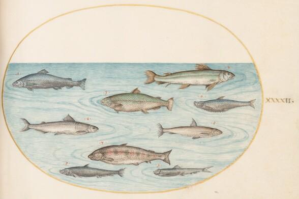 Plate 42: Nine Fish