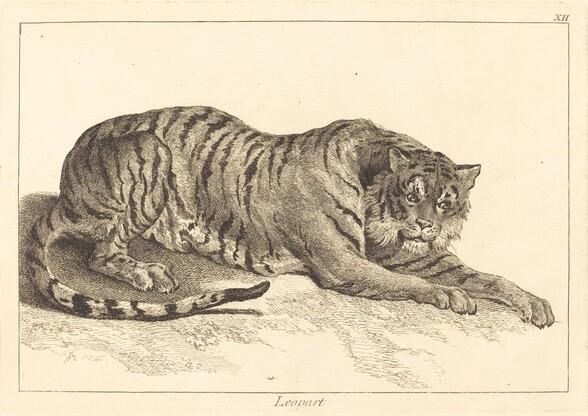 Leopart (Leopard or Tiger)