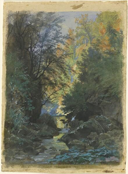 A Stream through a Dense Forest