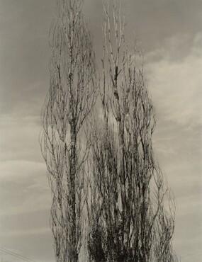 image: The Two Poplars, Lake George